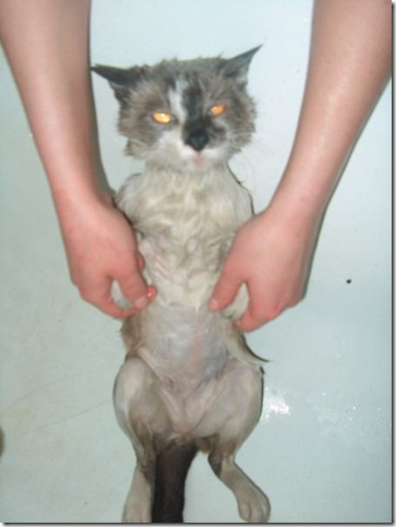 13125_wet_pussy_cats_14
