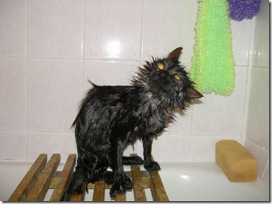 13125_wet_pussy_cats_15