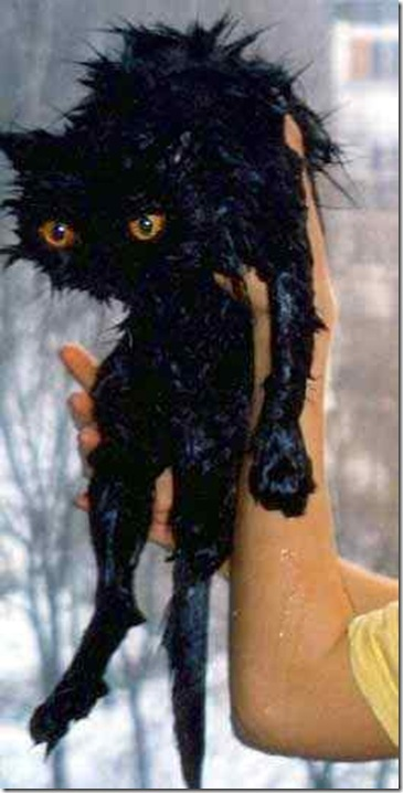 13125_wet_pussy_cats_6